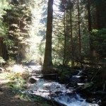Zelenský potok